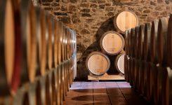 La ruta del vino del Bierzo Enoturismo se posiciona como el primer destino nacional vitivinícola a visitar